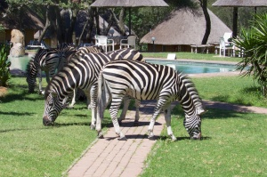 Zebra coming to join the meeting
