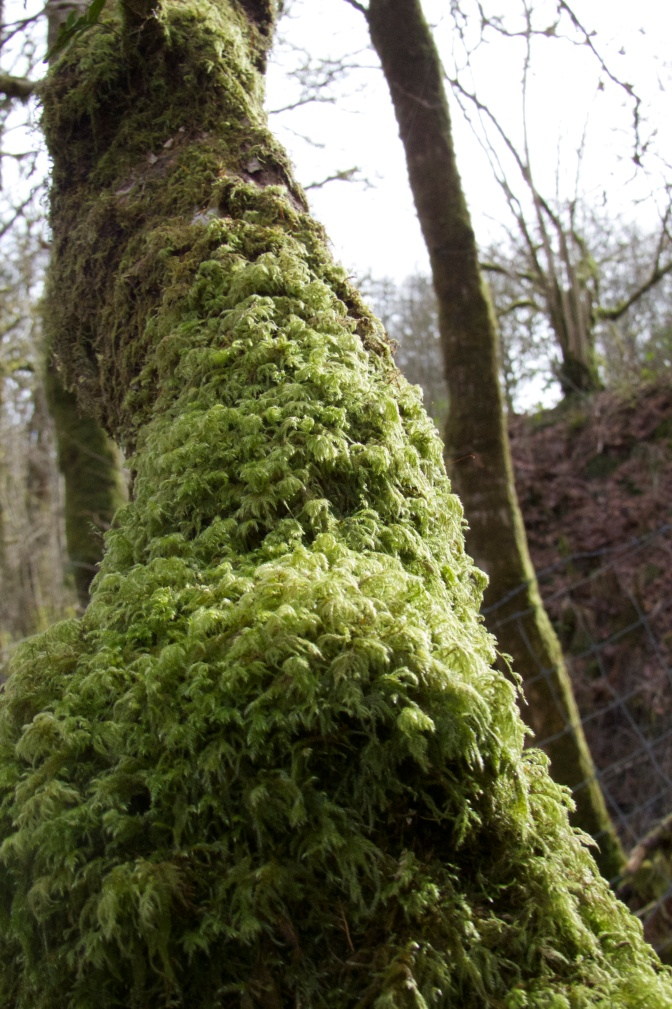 Moss covered tree trunk