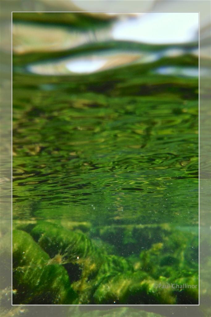 Underwater alga