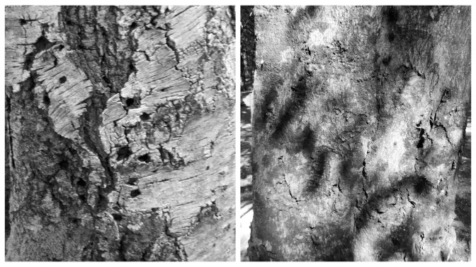 On the left is an old silver birch left to rot. The remaining wood was pockmarked with beetle holes. The beech on the right had some interesting shadows playing over the bark - though these didn't really come out in the photo.