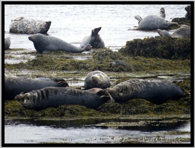 Grey seals 'just hanging'!