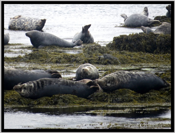Grey seals 'just hanging'!