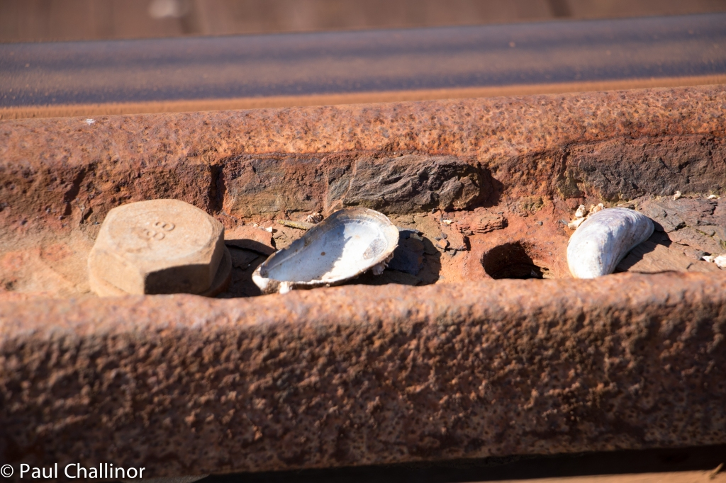 The bird use the tracks and supporting metal rails as anvils to break oven sea shells. The remains of shells are littered all along the bridge.