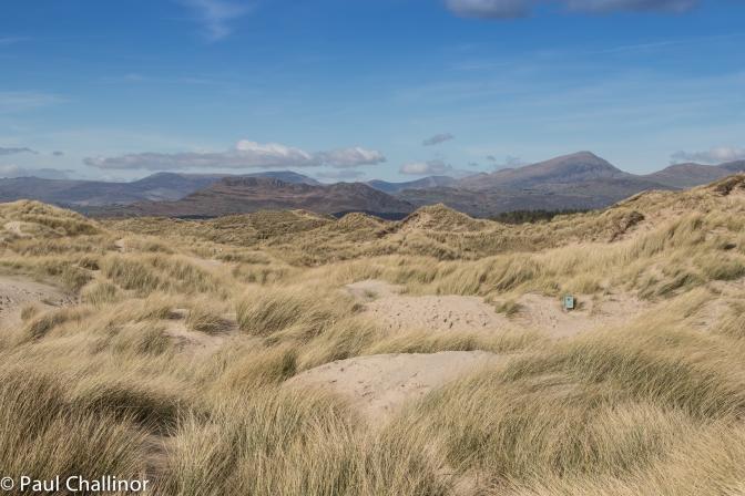 The sand dunes with Moel Hebog behind