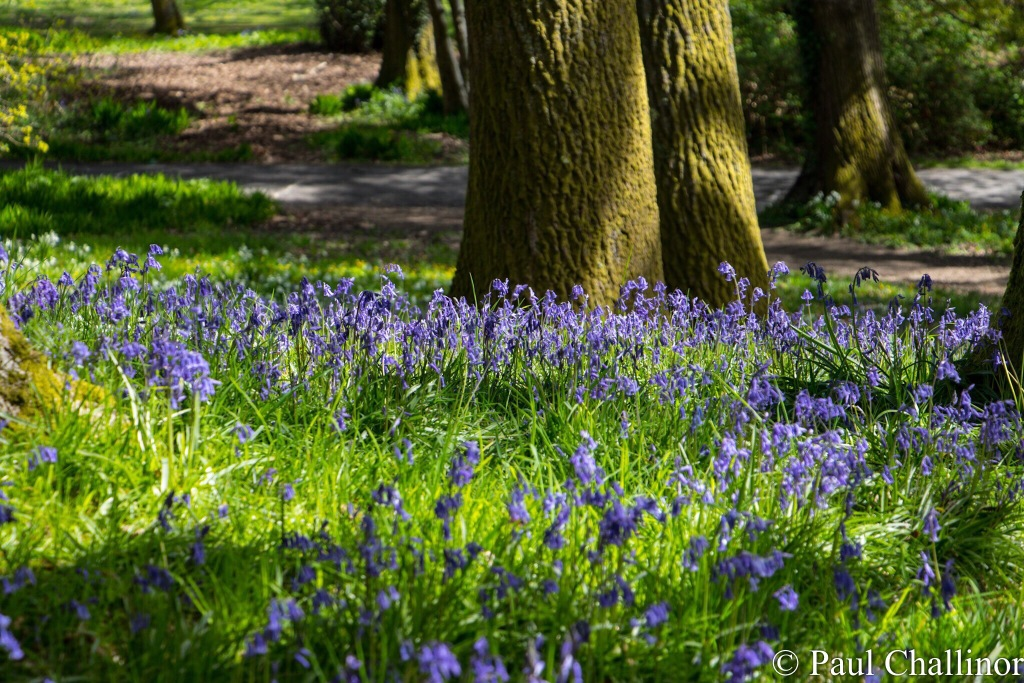 The Blue Bells also put on a show.