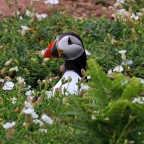 Two Pauls And A Fistful Of Puffins