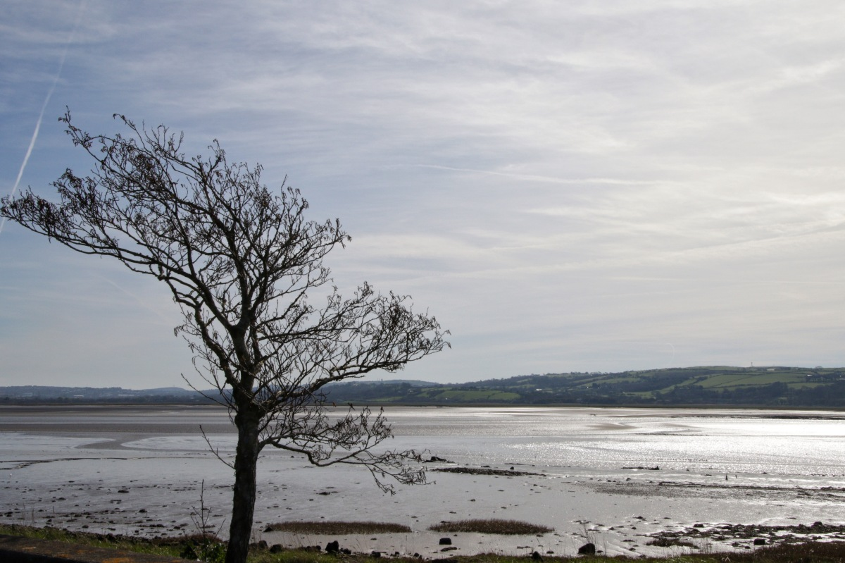 Loughor Estuary 170325