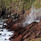 Manorbier to Freshwater East – Emperors on the path